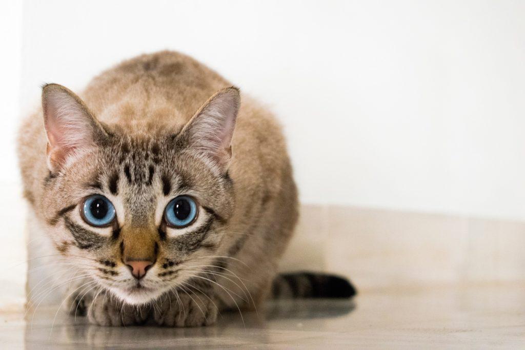 Agria: Kattunge leker