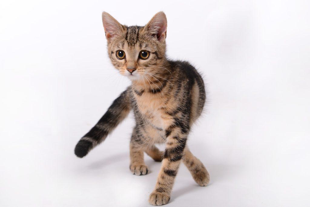 Vaccinera kattunge: Liten söt kattunge