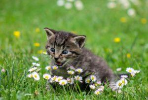 Kattillbehör: Katt som leker med blommor