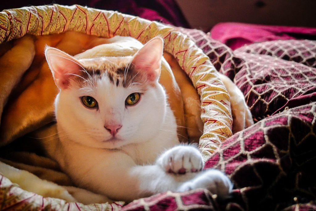 Kattillbehör katt som ligger i kattsäng