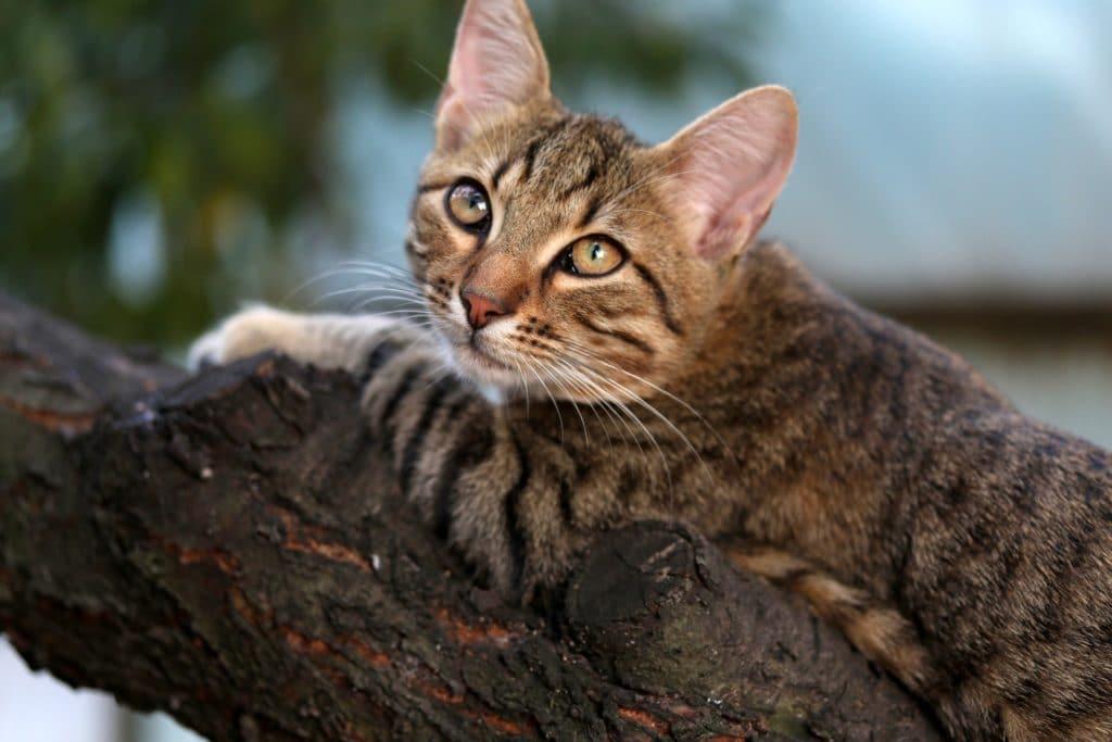Kattraser kattunge klättrar i träd