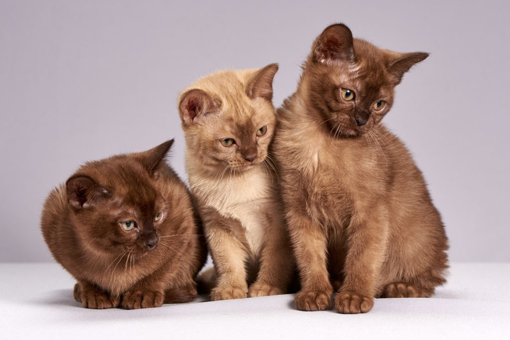 FirstVet katter