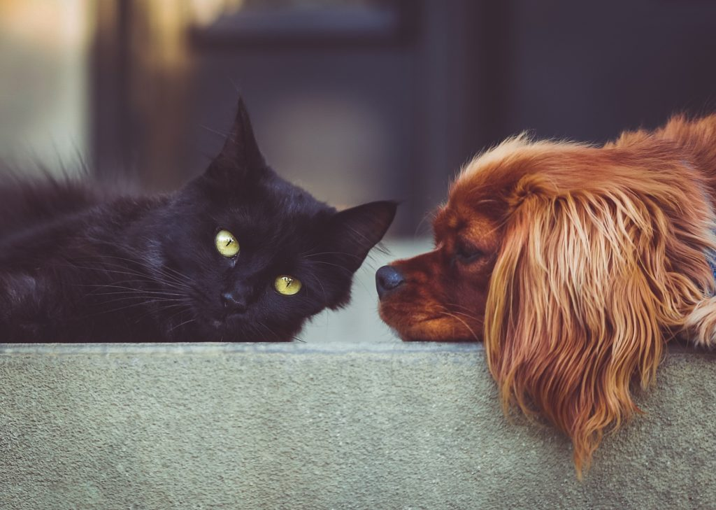 djuruppfödare katt och hund