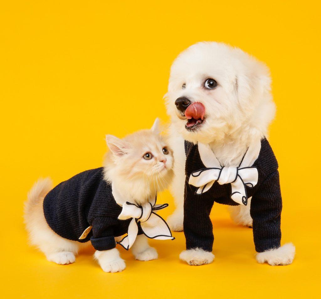 Finklädd katt och hund