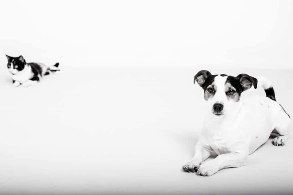 FirstVet: Katt och hund