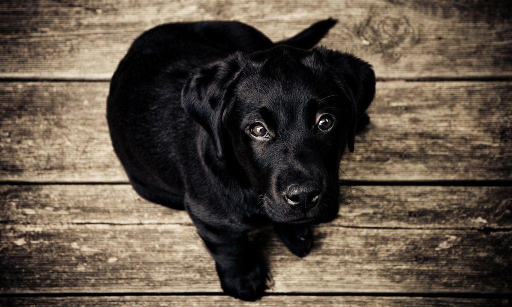 Agria hundförsäkring