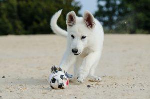 10 bra saker till din hundvalp