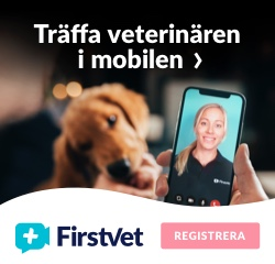 Digitala veterinären FirstVet