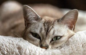 7 tecken på att din katt tycket om dig