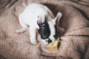 Julklapp hund