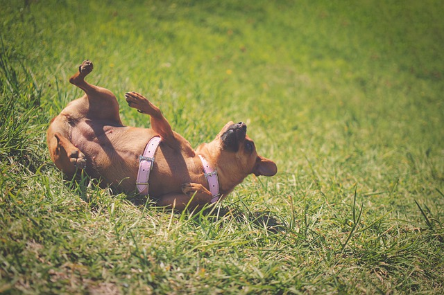 Hundars känslor: Glad hund som leker